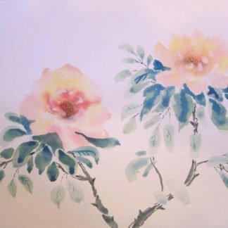 Gardenie - Acquerello